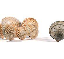 seashells by Mauro Rodrigues