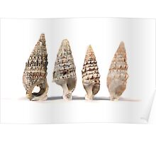 group of seashells Poster