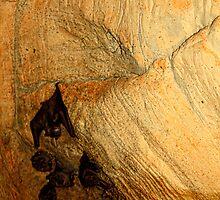 Bats by Carolyn  Fletcher
