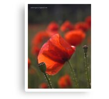 ❤❤❤ As you know ,  I love colorful poppies !  Featured in The Silky Touch &  Colour and light . Mon Dieu ! Merci  bien ! Amen. Canvas Print