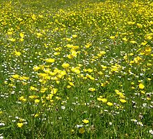 Buttercups & Daisies by IngridSonja