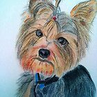 Cheeky Yorkie by DianeL