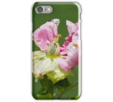 dried peony in the garden iPhone Case/Skin