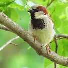 Sparrow In Green by lorilee