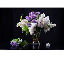 Still life of purple and white lilac in glass vase Photographic Print