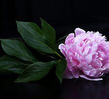 Pink peony  by torishaa