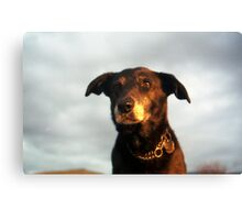 Farewell Sweet Shela Canvas Print