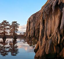 Trunk Lines by Bruce Bischoff