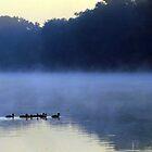 Morning Swim by Don Marshall