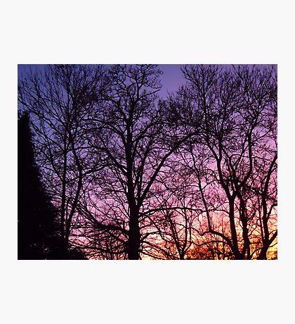 Twilight Trees Photographic Print
