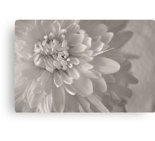 Monochrome Chrysanthemum Close-up  Canvas Print