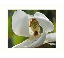 Magnolia Peek Art Print