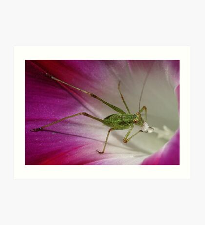 Tiny Grasshopper on Mornig Glory Art Print