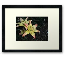 Beautiful Specled lily Flower Framed Print