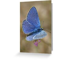 Common Blue Greeting Card