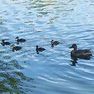 Ducklings by Gordon Pegler