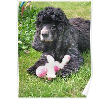 Cocker Spaniel and Toy Poster