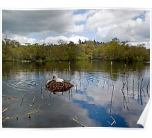 Swan Lake, Bolam Northumberland Poster
