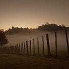 Waitomo, NZ by Andrejs Jaudzems