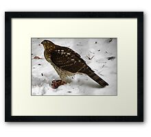 Survival of the Red Tailed Hawk  Framed Print