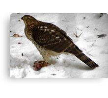 Survival of the Red Tailed Hawk  Canvas Print