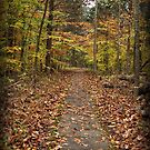 Rim Rock Path by Sandy Keeton