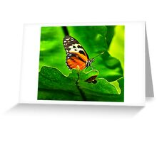 Isabella Butterfly Greeting Card