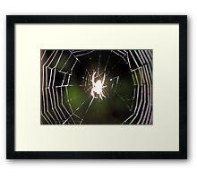 Ghost Spider! Framed Print
