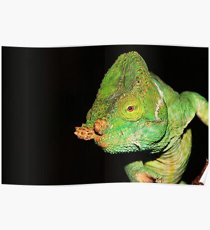 Green Chameleon Poster