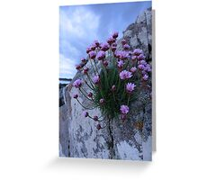 sea pink Greeting Card