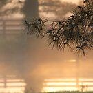 Jetlag and Sunrise by cishvilli