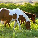 Greener Pastures  by Jeanne  Nations