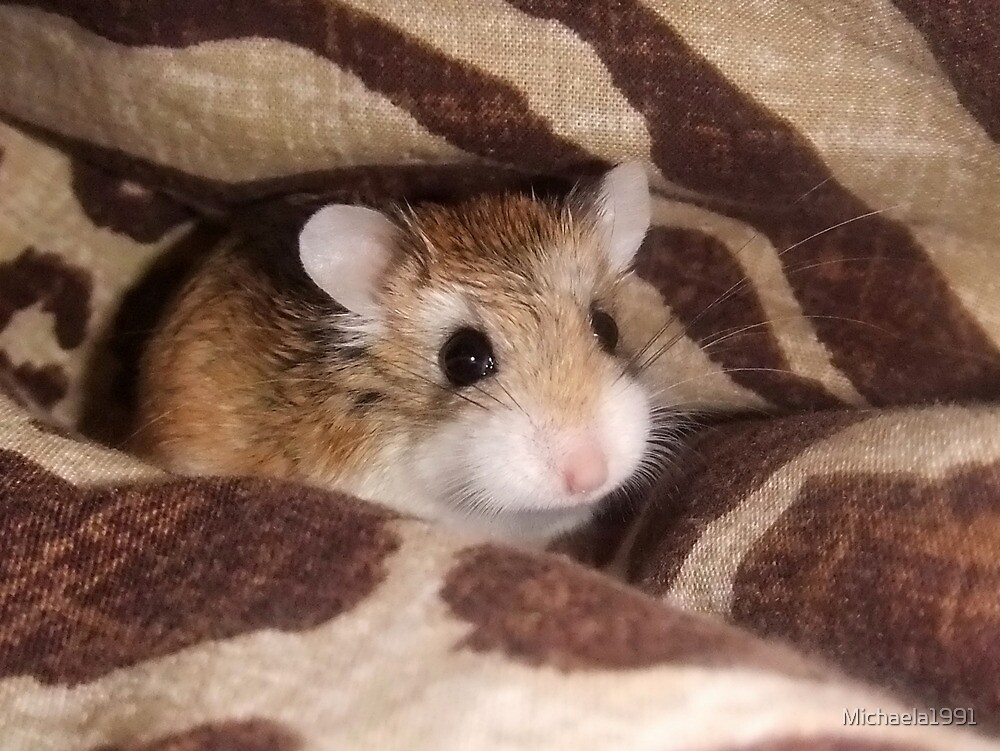 Cheese the Roborovski Hamster by Michaela1991