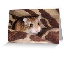 Cheese the Roborovski Hamster Greeting Card