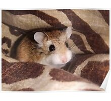 Cheese the Roborovski Hamster Poster