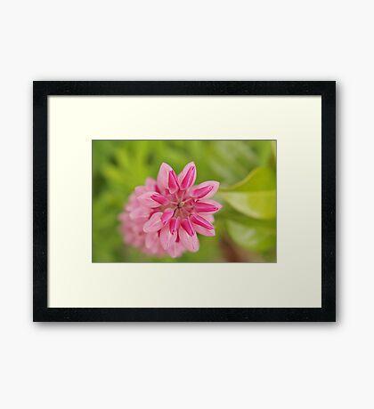 Lupin abstract Framed Print