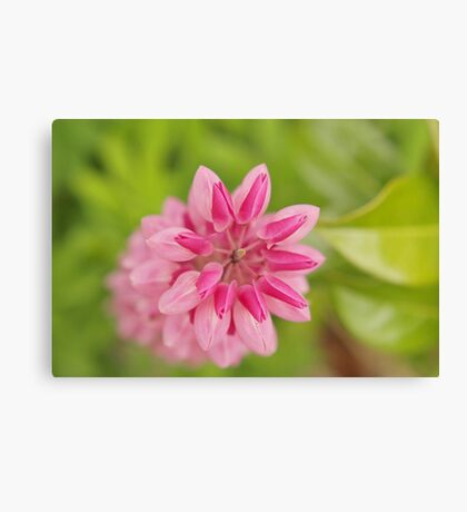 Lupin abstract Canvas Print