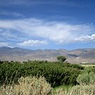 Sagebrush And Mountains by marilyn diaz