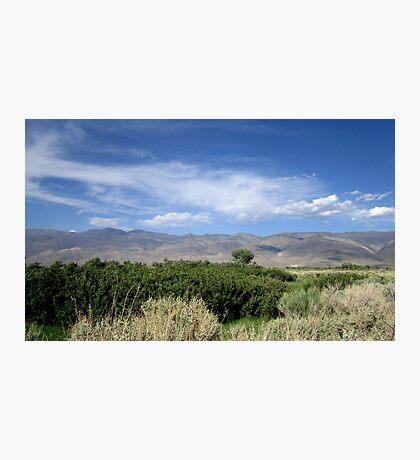 Sagebrush And Mountains Photographic Print