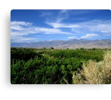 Wild Roses And Sagebrush Canvas Print