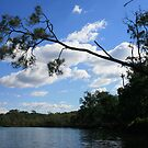 A Lone Leaning Tree Up A Creek by aussiebushstick
