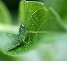 Baby Grasshopper on Leaf in Camouflage by mhm710