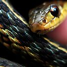 Gardiner Snake by MJD Photography  Portraits and Abandoned Ruins