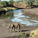 Elephant crossing! by jozi1