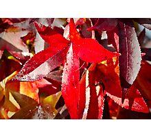 Autumn 2012 Photographic Print