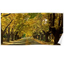 Colourful Autumn Poster
