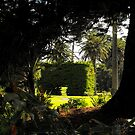 Botanical Gardens, Warrnambool  by Kayleigh Walmsley