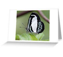 Beautiful little blue... Greeting Card