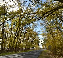 The autum road leading to where ever by Jemma Richards