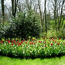 Reds in the Bed - Tulips in the Keukenhof Gardens by Kathryn Jones